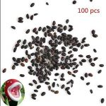semer plantes aromatiques en pot TOP 5 image 4 produit