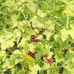 semis arbre fruitier TOP 4 image 3 produit