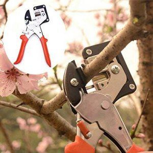semis arbre fruitier TOP 6 image 0 produit