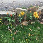 semis arbre fruitier TOP 7 image 4 produit