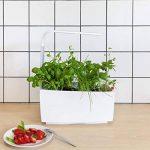 semis plantes aromatiques TOP 11 image 3 produit