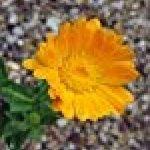 semis plantes aromatiques TOP 5 image 1 produit