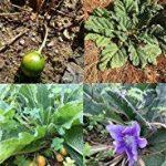 semis plantes aromatiques TOP 6 image 1 produit