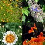 semis plantes aromatiques TOP 8 image 1 produit