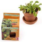 serre plante carnivore TOP 1 image 3 produit
