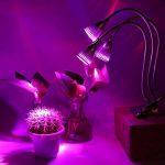 serre plante carnivore TOP 12 image 4 produit