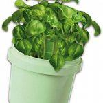 Ses France 25081 - Kit De Loisirs Créatifs - Herbes Aromatiques de la marque Ses France image 1 produit