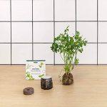 Tregren T3 Potager d'intérieur Connecté 3 plantes, Kit prêt à pousser et Jardinière Autonome pour herbes aromatiques, petits légumes, fleurs - Cultivez avec votre application smartphone - Gris de la marque Tregren image 3 produit