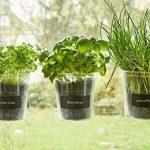 Trio de plantes aromatiques «Basilic» pour fenêtre de cuisineÉtiquette et craie - Fresh Herbs Trio - Jardin - Herbes Jardin - Décoration de fenêtre - Cadeau - Ø 13cm - Hauteur: 16cm. de la marque Cuadros Lifestyle image 1 produit