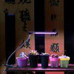 Usine LED Light-Promouvoir l'usine grandir avec la fonction de synchronisation, Hydroponics Greenhouse Lampe de jardin Plant Croissance et fleur Ordinateurs Bureau Bureau Éclairage de tâche USB Lampe de chevet de la marque Lumière de la plante image 4 produit