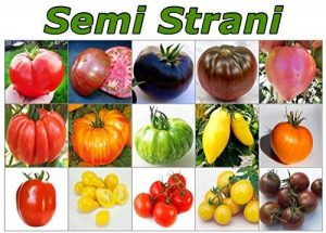 variété tomate TOP 2 image 0 produit