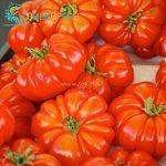 variété tomate TOP 8 image 1 produit