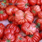 variété tomate TOP 8 image 3 produit