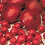 Willemse France Oignon 'Rouge foncé de Brunswick' de la marque Willemse-France image 1 produit